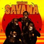 appaloosa-savana