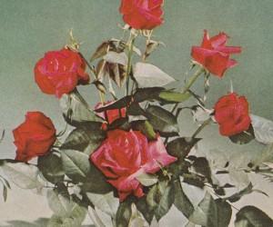 White Poppy – Daydreaming