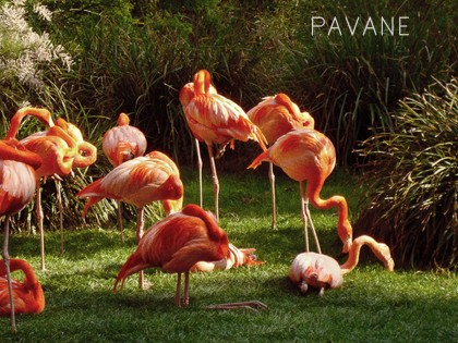 Pavane – L'échappée (PREMIERE)