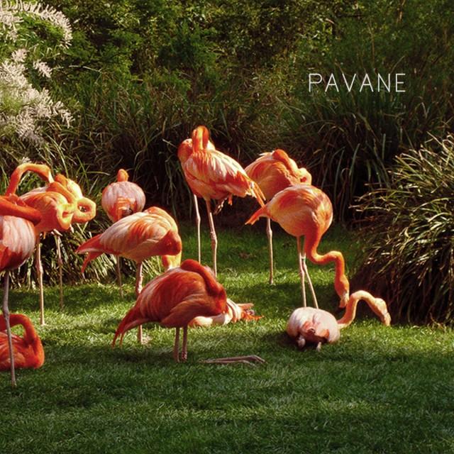 Pavane - L'échappée